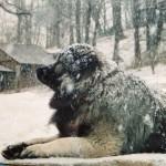 Artù ama la neve!