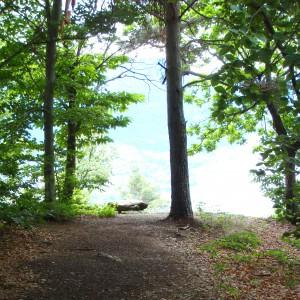 Il bosco e il lago