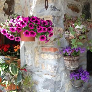 Colori e profumi di primavera