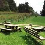 Un picnic nel verde