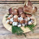 e ancora funghi...
